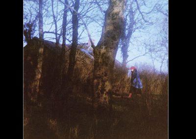 treesinyourwindow